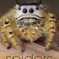 Spiders, learning to love them