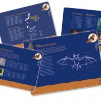 Museum in a Box – Bats