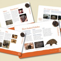 Museum in a Box – Echidnas