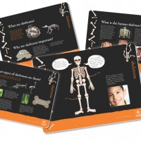 Museum in a Box – skeletons